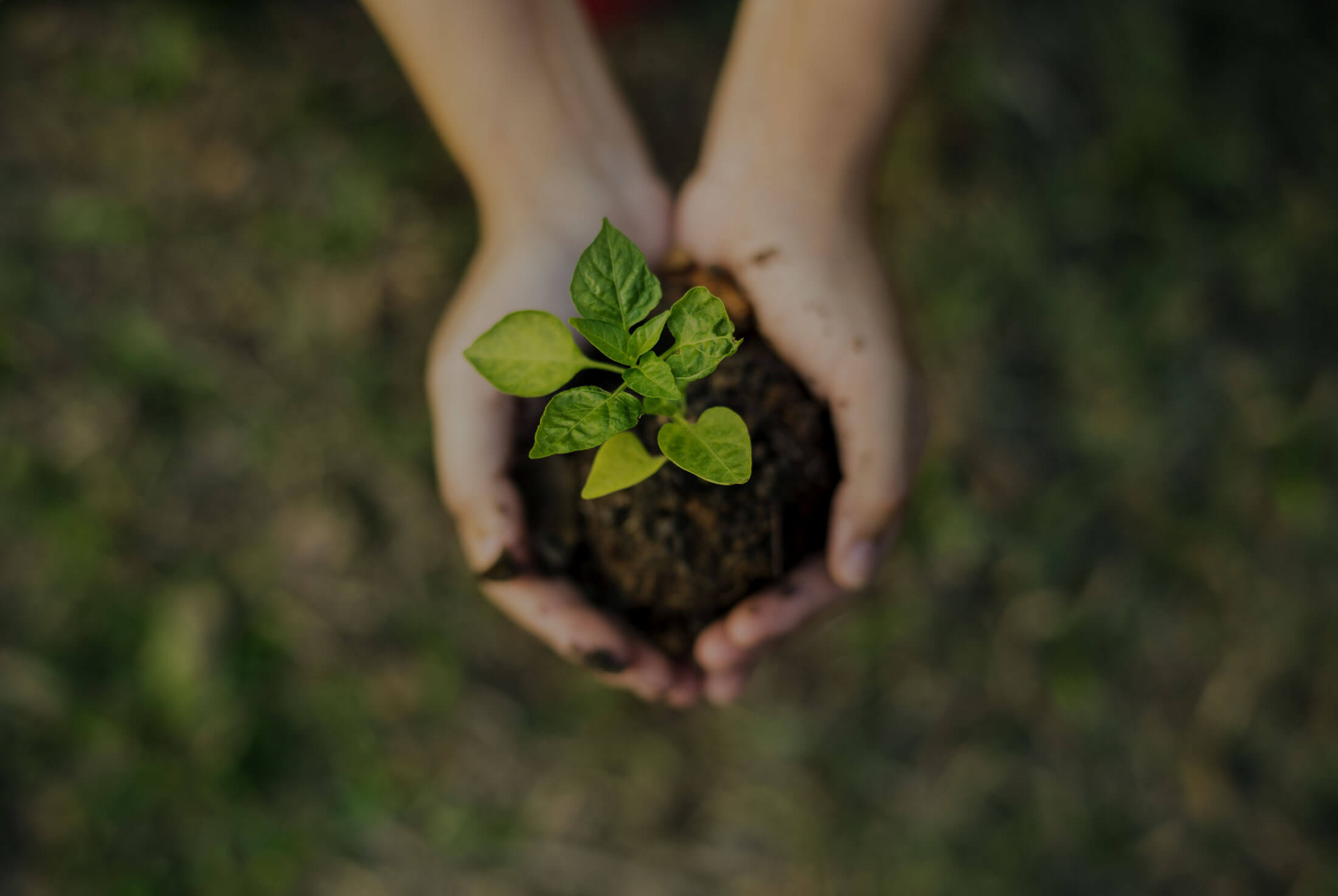Pair of hands holding a small green plant
